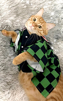 Pets Costume Demon Slayer Kimetsu no Yaiba Tanjiro Kamado Haori Pet Costume Kimono Cat Costume for Winter