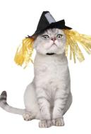 [Free US Economy Shipping] Halloween Pet Accessory Wacky Decoration Cat Dog Scarecrow Hat