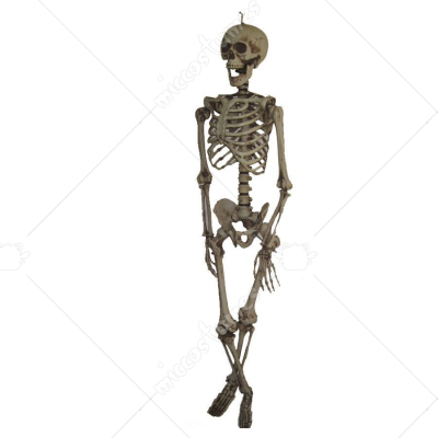 Hanging Skeleton 60I