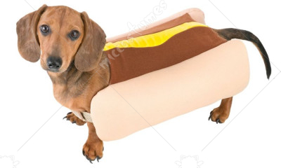 Hot Dog Pet Costume