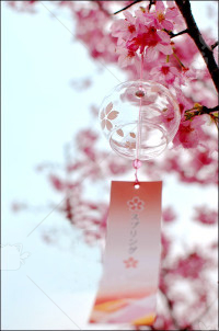Japanese Glass Wind Chime Sakura
