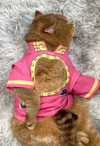 JoJos Bizarre Adventure Golden Wind Giorno Giovanna Pets Cosplay Costume Photo Prop for Cats Small Dogs