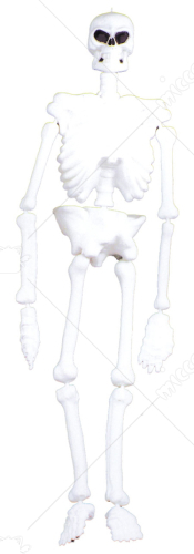 Skeleton 5 Foot Glow Plastic