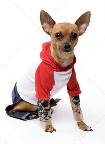 Tattoo Dog Costume