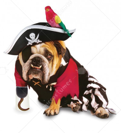 Zelda Pirate Pet Costume