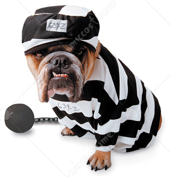 Zelda Prisoner Pet Costume